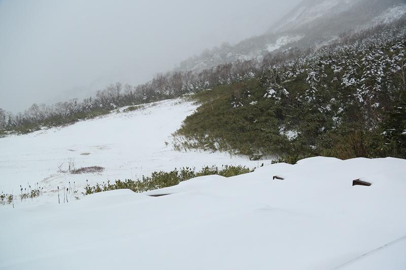 18103104_tsugaike