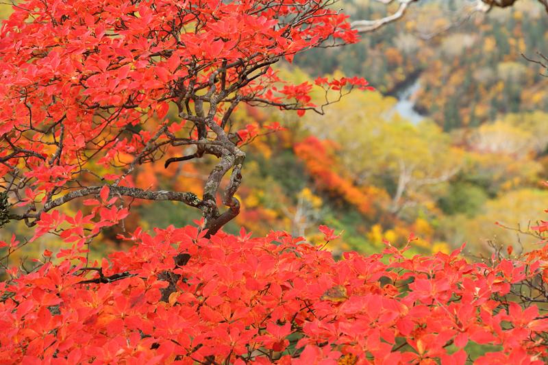 20101103_tsugaike
