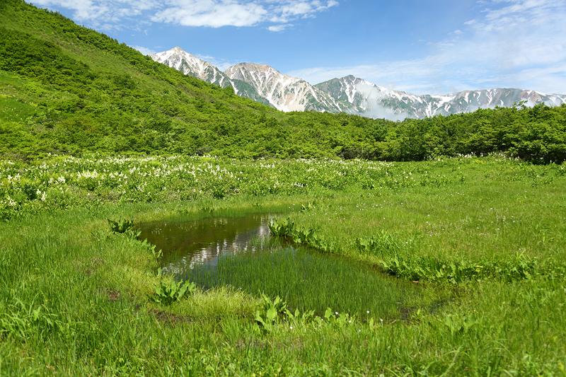 黒菱平_鎌池湿原