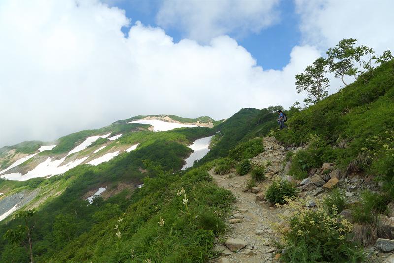 唐松岳への登山道_上の樺