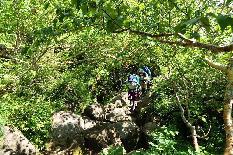 白馬大池への登山道_白馬乗鞍岳東斜面