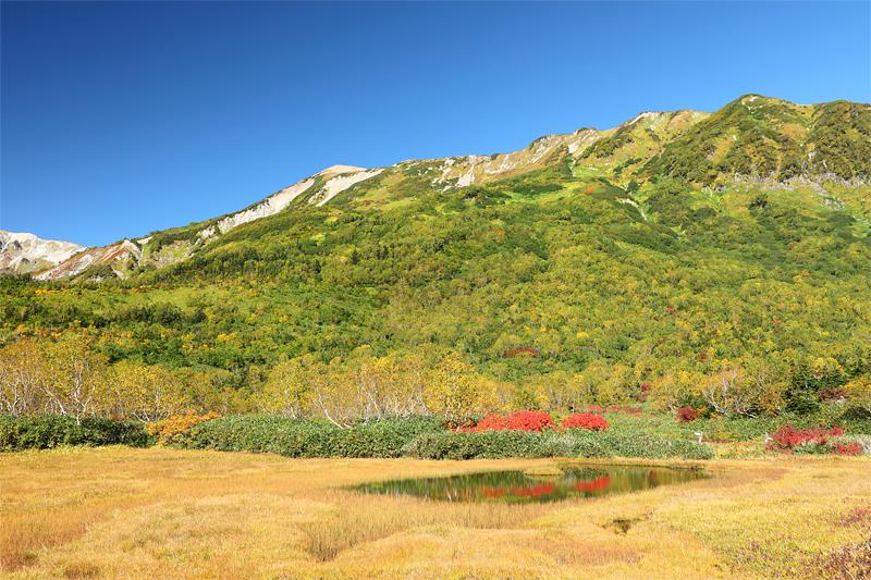 栂池自然園_浮島湿原