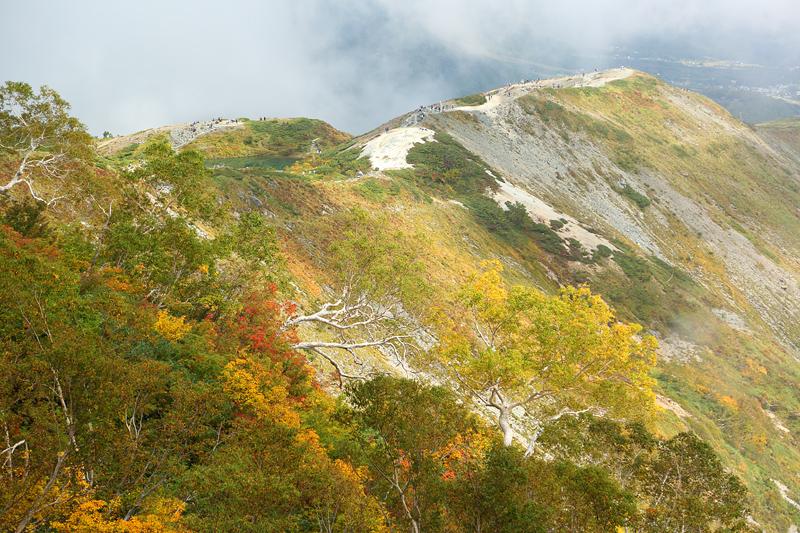 唐松岳への登山道_下の樺